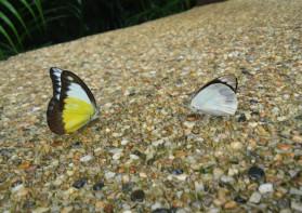 두마리의 나비, 사람, 하나님 아버지