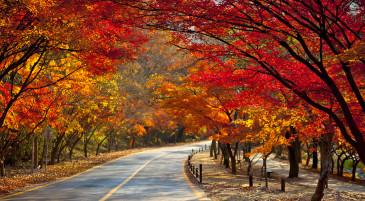'가을'하면 떠오르는 것은?